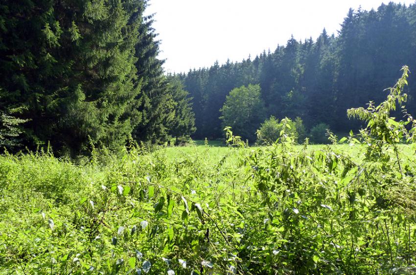 images/Natur_Slide/Natur_004.jpg