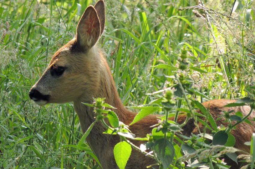 images/Natur_Slide/Natur_008.jpg